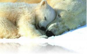 Das Bild zeigt eine Eisbären-Mama mit ihrem Kind