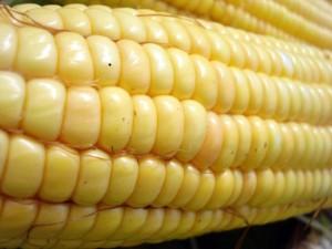 Bild eines Maiskolbens