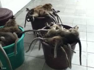 http://www.buav.org/monkey-slaughter-gallery