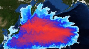 fukushima-wo-bleibt-das-radioaktive-wasser-main-18397