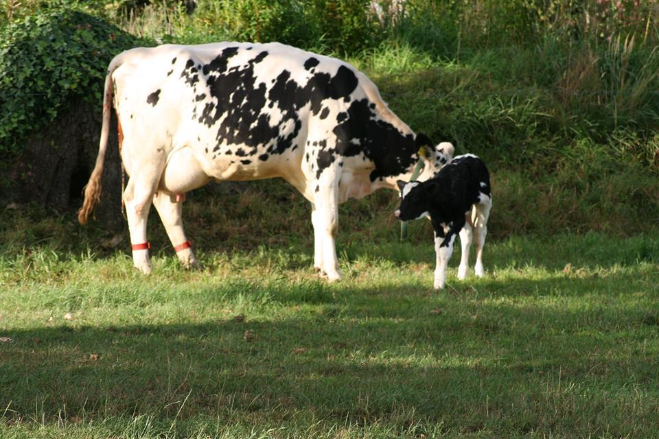 Spenden Sie menschliche Muttermilch