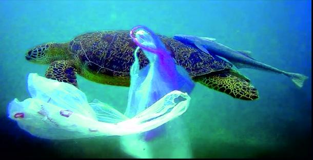 Plastikmüll  Teppiche im Ozean – Plastik als Fischfutter