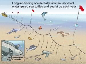 Langleinenfischerei