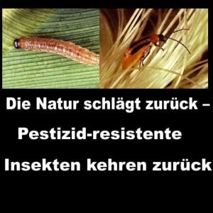 Die Natur schlägt zurück – Pestizid-resistente Insekten kehren zurück