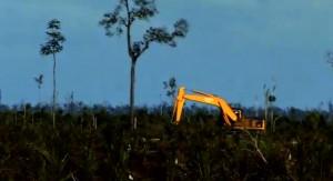 """Indonesiens Regenwald-Bewohner sind Opfer von """"legalem Landraub"""" Palm%C3%B6l-300x163"""