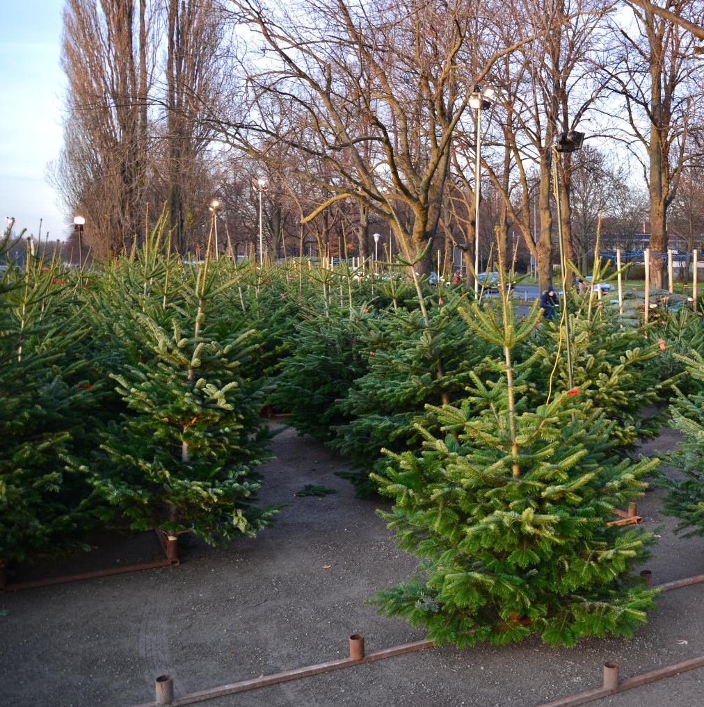29 millionen weihnachtsb ume oh tannenbaum wie giftig sind deine bl tter sogar glyphosat. Black Bedroom Furniture Sets. Home Design Ideas