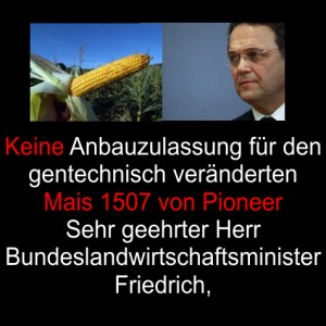 Bundeslandwirtschaftsminister Friedrich – Keine Anbauzulassung für gentechnisch veränderten Mais