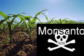 Monsanto1111
