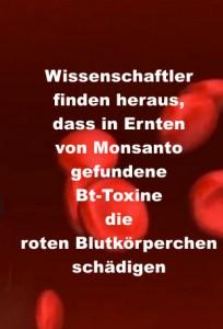 Wissenschaftler finden heraus, dass in Ernten von Monsanto gefundene Bt-Toxine die roten Blutkörperchen schädigen