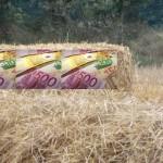 Wird Getreide für Nahrungsmittel ein Luxusgut?
