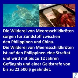 Meeresschildkroeten
