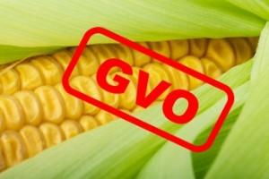 Bericht über GVO-Mythen und Wahrheit – GMO MYTHS AND TRUTHS REPORT