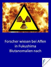 Affen in fukushima zeigen blutanomalien durch strahlung fukushima