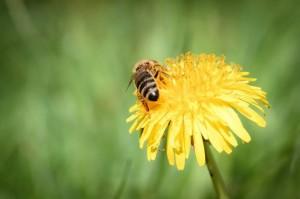 Unkrautresistenz als Antwort auf die Giftcocktails – Die Natur schlägt zurück!