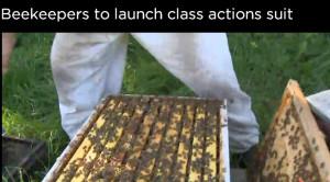 Netzfrauen Bienen 1