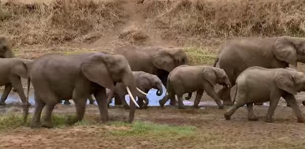 Netzfrauen Elefanten1