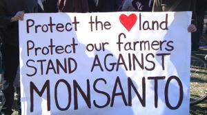 Medien schweigen: Trotz Bedingung für DR-CAFTA – Umstrittenes Monsanto-Gesetz in Guatemala aufgehoben