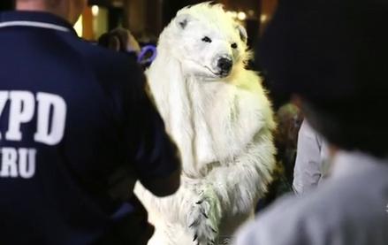 UN-Klimagipfel New York: Aktivisten incl. Eisbär festgenommen –  Police arrest climate change protesters