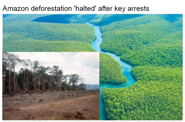 Amazonas Regenwald durch Verhaftungen geschützt – Amazon deforestation 'halted' after key arrests