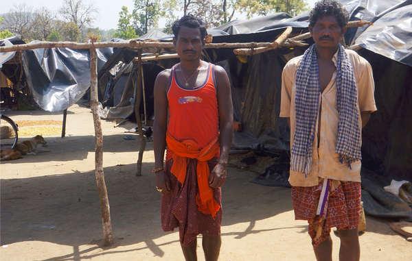 Indien: Indigene sollen aus Tiger-Reservaten verschwinden