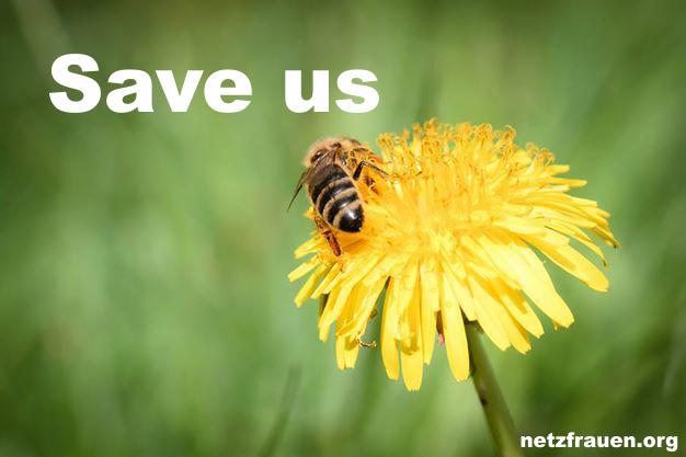 Bienen 9