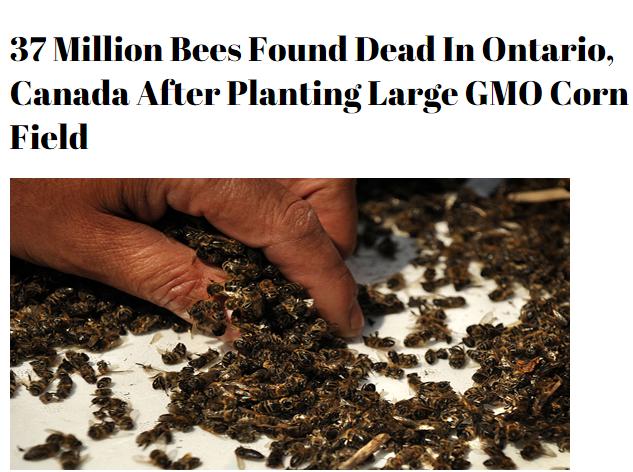 auf honig kann man verzichten auf best ubung nicht 37 million bees found dead in ontario. Black Bedroom Furniture Sets. Home Design Ideas