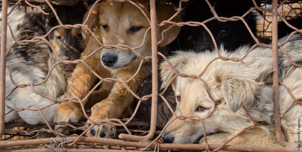 Achtung! Das Leid der Tiere – Kunstpelz ist oft echtes Hundefell