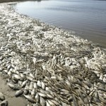 Fukushima – Abgestorbene Organismen bedecken den Meeresboden – 98% Of Pacific Seafloor Covered In Dead Sea Creatures 145 Miles Off The Coast Of California