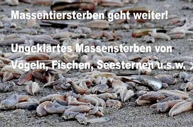 Massentiersterben geht weiter: Ungeklärtes Massensterben von Vögeln, Fischen, Seesternen usw.