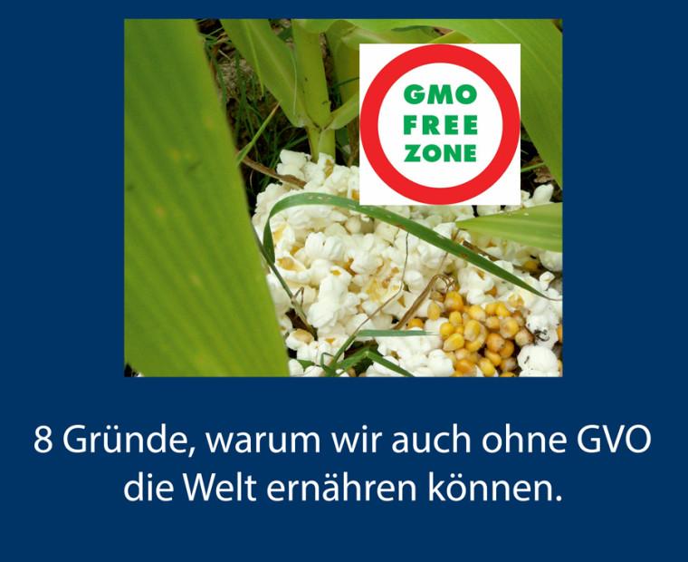 GVO No