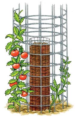 horizont 13 tomaten selbst anzubauen ist nicht schwer. Black Bedroom Furniture Sets. Home Design Ideas