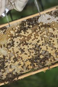 Bienen-200x300