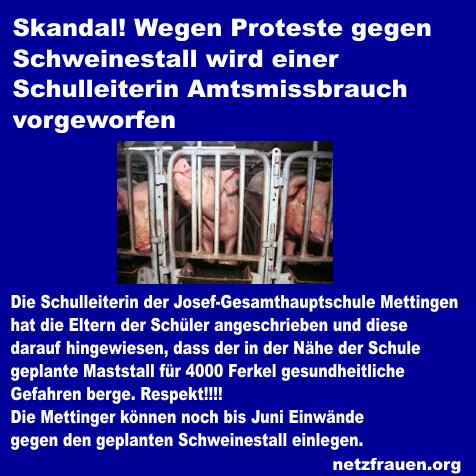 Skandal! Proteste gegen Schweinestall – Schulleiterin wird Amtsmissbrauch vorgeworfen