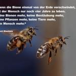 Video: Das Geheimnis des Bienensterbens