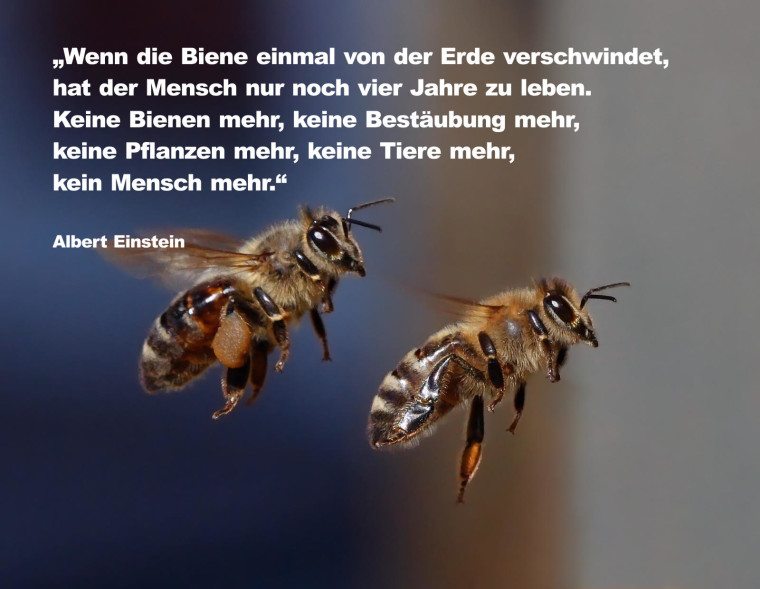 Bienen_im_Flug_52f_aufpoliert