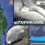 delphine sterben am strand