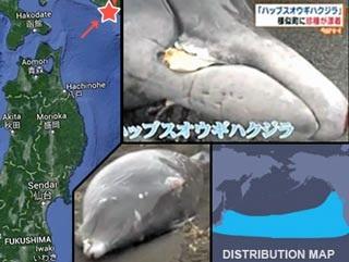 Delphine sterben am Strand in der Präfektur Ibaraki