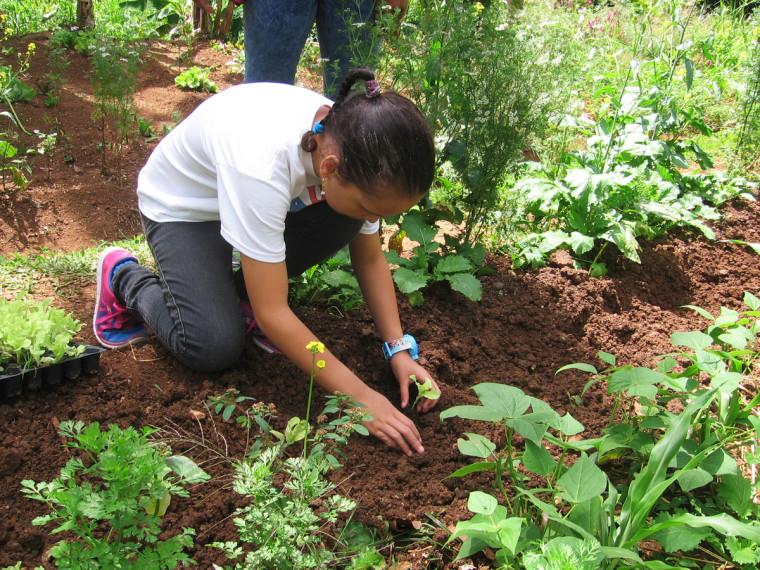 Puerto Rico – Mit heimischen Nahrungsmittelversorgung gegen wirtschaftliche Krise – Neue Generation von Kleinbauern – Dependent on imports, Puerto Rico's food eyes local rebirth