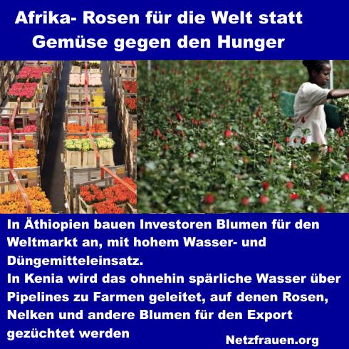 Afrika – Rosen für die Welt statt Gemüse gegen den Hunger