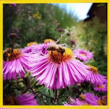 Welche Blumen locken Bienen an?