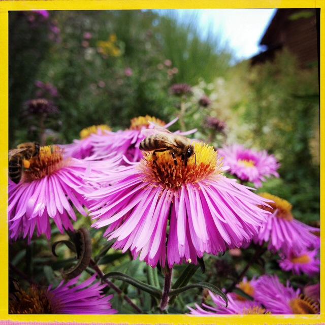 Welche Blumen Locken Bienen An Netzfrauen Netzfrauen