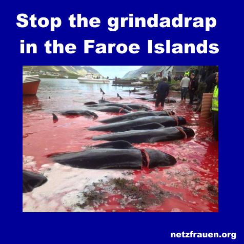 Stoppt das blutige Wal-Massaker auf Färöer! Stop the grindadrap in the Faroe Islands