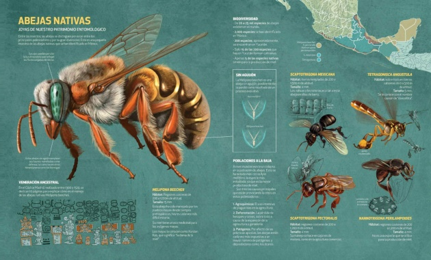 abejas_nativas_