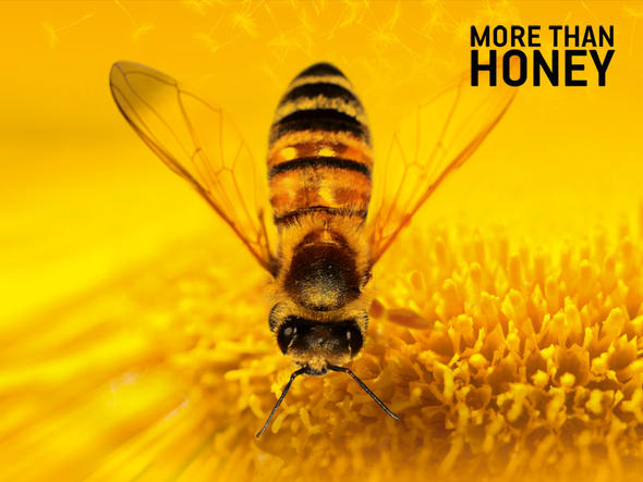 More than Honey – Bitterer Honig – ABELHAS E HOMENS