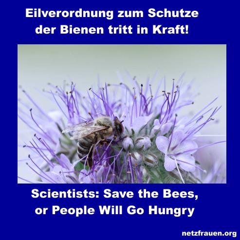 eilverordnung zum schutze der bienen tritt in kraft save the bees or people will go hungry. Black Bedroom Furniture Sets. Home Design Ideas