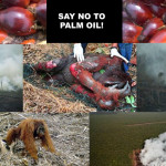 Zerstört die subventionierte Fleisch- und Milchindustrie den Regenwald nicht nur für Soja, sondern auch für Palmöl als Tierfutter? Buttergate- Palm oil for animal agriculture -Palm oil is used in almost all types of animal feed!