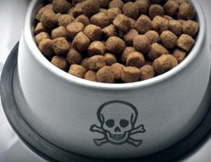 Vorsicht – Hundefutter genmanipuliert -The Dangers of Genetically Modified Ingredients in Dog Food