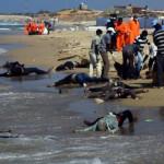 """Während Europa Afrika ausbeutet, Kriege finanziert und """"Terroristen"""" unterstützt …"""