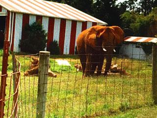 Elefanten99