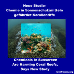 Chemie in Sonnenschutzmitteln gefährdet Korallenriffe – Chemicals In Sunscreen Are Harming Coral Reefs, New Study says